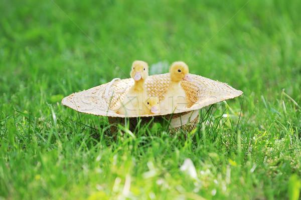 Klein groen gras outdoor voorjaar gras kind Stockfoto © taden