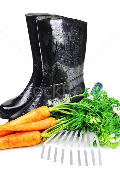морковь грабли природы работник Сток-фото © taden