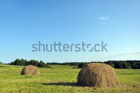 Kuru ot yığını çayır yaz manzara gökyüzü Stok fotoğraf © taden