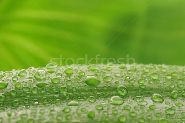 Zöld növény levél vízcseppek friss közelkép Stock fotó © taden