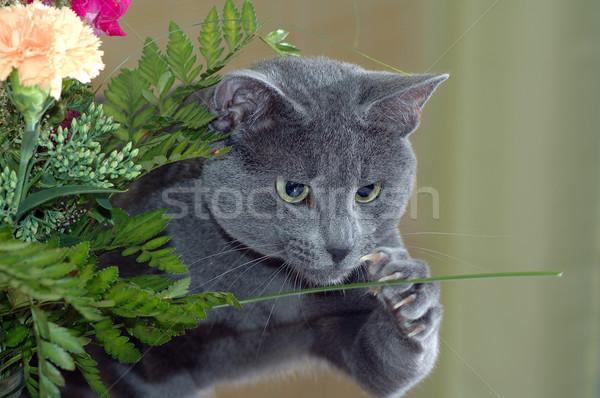 Cat fiore russo blu home sfondo Foto d'archivio © taden