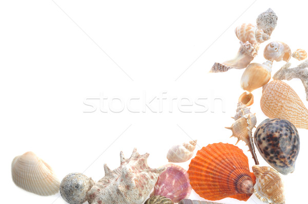 many sea cockleshells on white  Stock photo © taden
