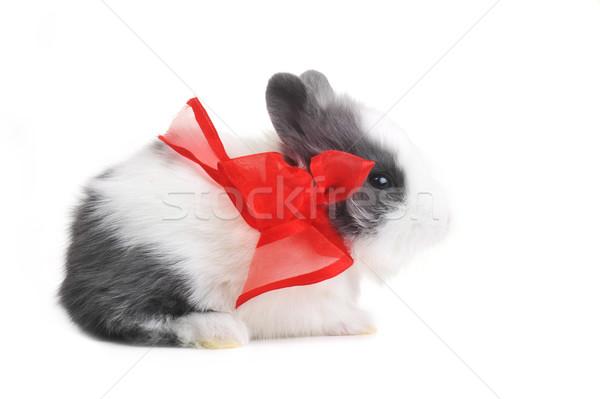 небольшой красивой кролик белый вечеринка Сток-фото © taden