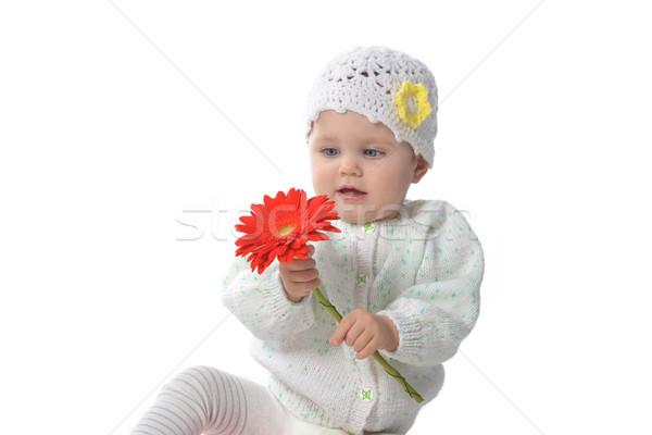 ストックフォト: 赤 · 花 · かわいい · 演奏 · 歳の誕生日