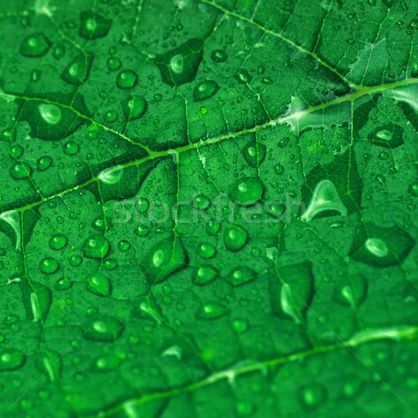 緑色の葉 水滴 水 抽象的な 夏 ストックフォト © taden