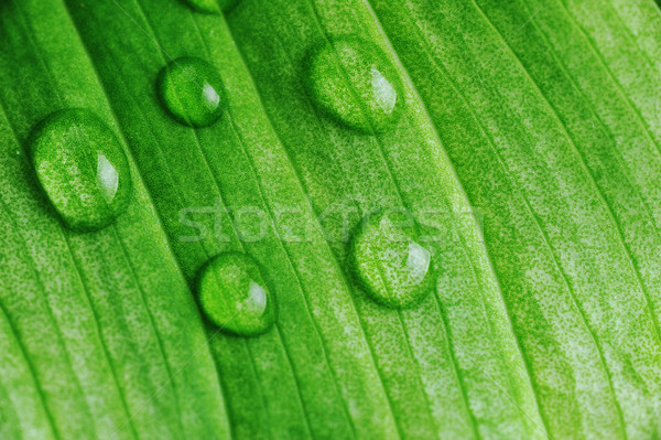 Stock photo: green leaf with water drops