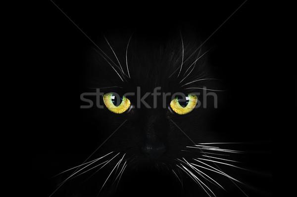 Porträt Haar Tiere schwarz Stock foto © taden