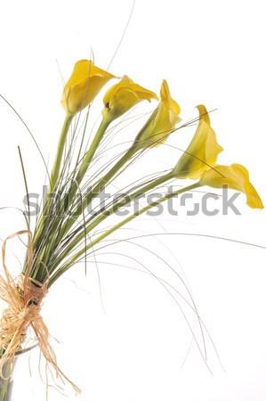 Buket beş sarı lilyum yalıtılmış beyaz Stok fotoğraf © taden