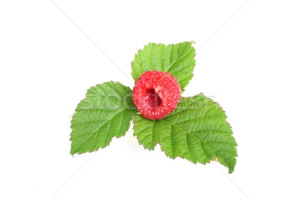 Olgun kırmızı ahududu yeşil yaprakları gıda Stok fotoğraf © taden