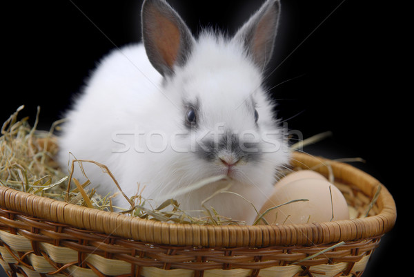 small rabbit and eggs in basket Stock photo © taden