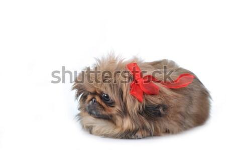 щенков забавный коричневый красный животные Сток-фото © taden