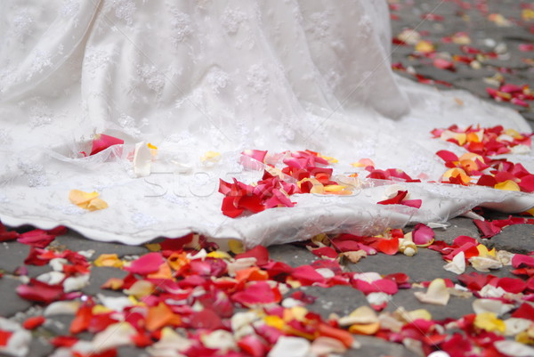 rose petals on ground Stock photo © taden