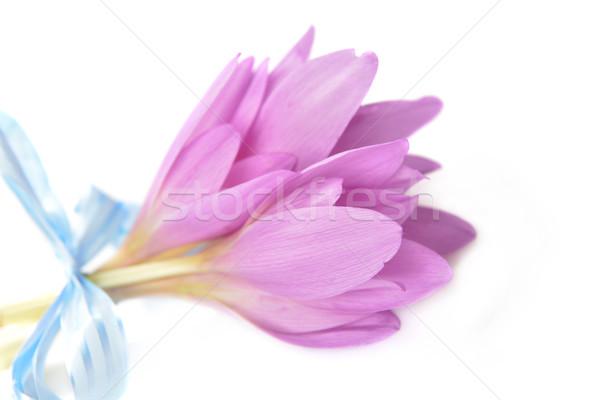 Buquê açafrão roxo flor flor tempo Foto stock © taden