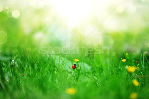 Fiori gialli fioritura primavera farm campo fiore Foto d'archivio © taden