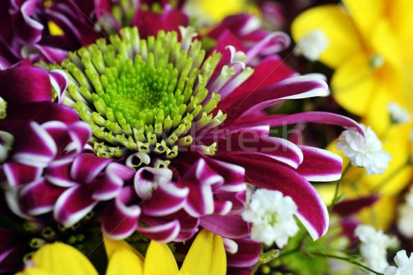 Bouquet fiori diverso giallo viola acqua Foto d'archivio © taden