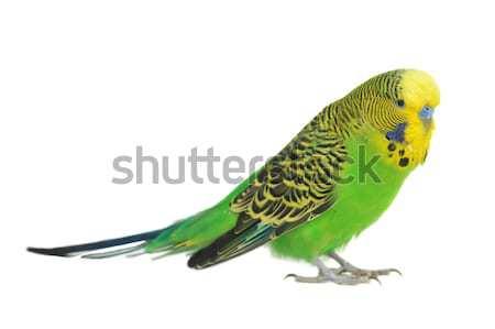 Portré közelkép toll állatok fej trópusi Stock fotó © taden
