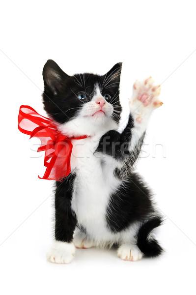 Güzel küçük kedi yavrusu yalıtılmış beyaz arka plan Stok fotoğraf © taden