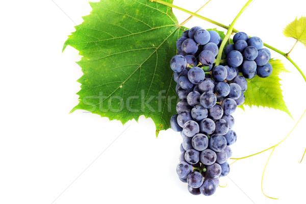 Frescos de uva hojas aislado naturaleza Foto stock © taden