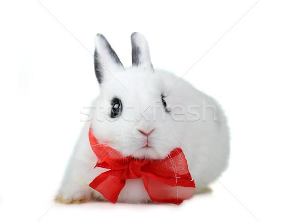 Tavşan küçük güzel beyaz parti Stok fotoğraf © taden
