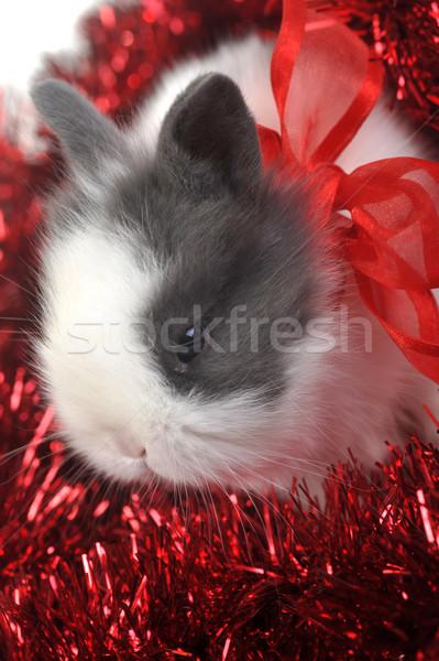 ウサギ 赤 花輪 小 美しい クローズアップ ストックフォト © taden