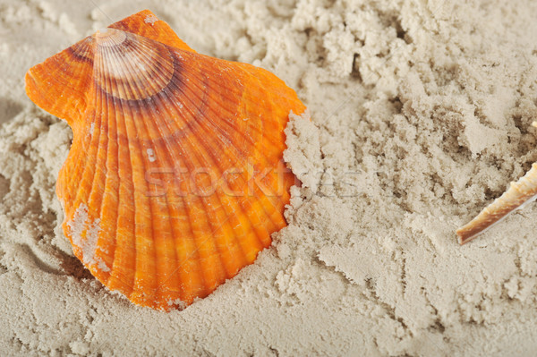 Cockleshells and sand Stock photo © taden