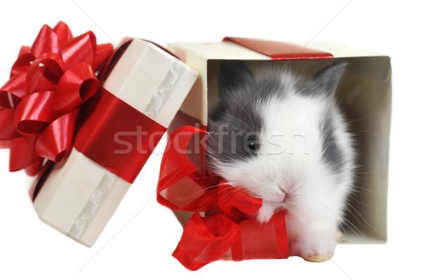 Caja de regalo blanco mullido conejo cuadro papel Foto stock © taden