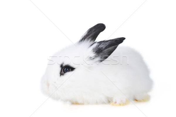 Hermosa conejo pequeño fiesta retrato animales Foto stock © taden