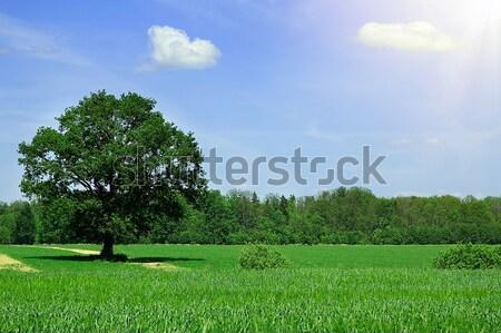 夏 風景 ツリー 空 ファーム 農業 ストックフォト © taden