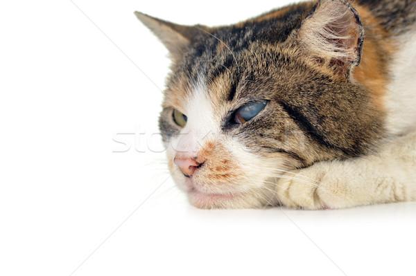 Kat cute geïsoleerd haren portret dieren Stockfoto © taden