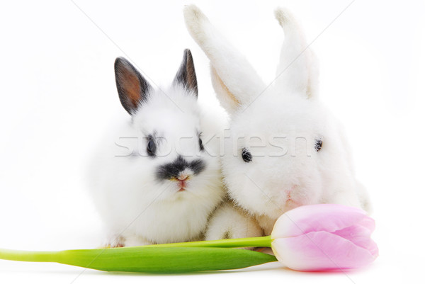 small rabbit and toy with flower Stock photo © taden