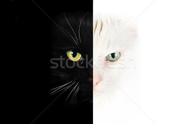 黒猫 肖像 髪 動物 黒 ストックフォト © taden