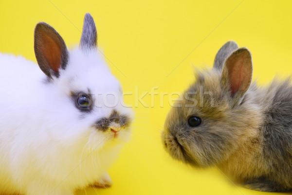 small rabbits Stock photo © taden