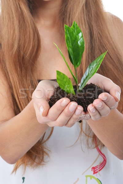 Hermosa verde árbol palmas Foto stock © taden