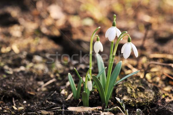 çiçekler taze büyümüş doğa yaprak hayat Stok fotoğraf © taden
