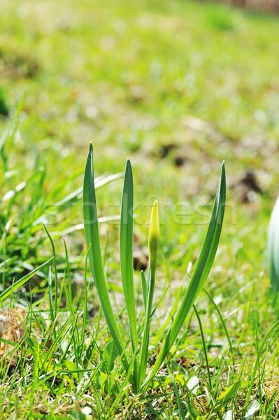 Broto flor grama verde grama natureza campo Foto stock © taden