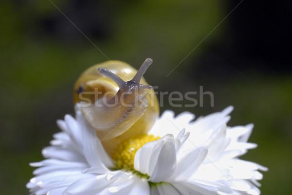 Foto stock: Caracol · flor · blanca · pequeño · alimentos · hierba · jardín