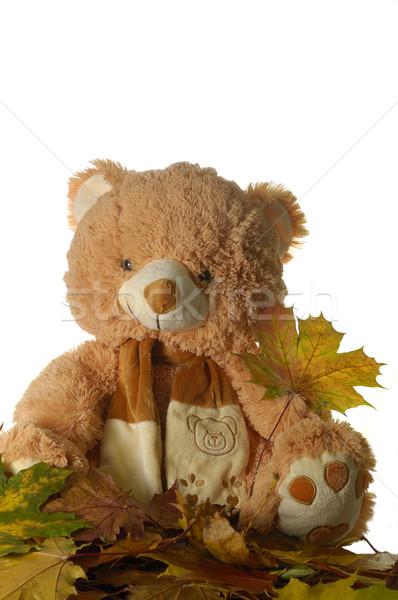 Oyuncak ayı yaprak sarı çocuklar Stok fotoğraf © taden
