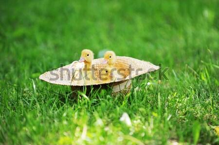 Küçük yeşil ot açık bahar çim çocuk Stok fotoğraf © taden