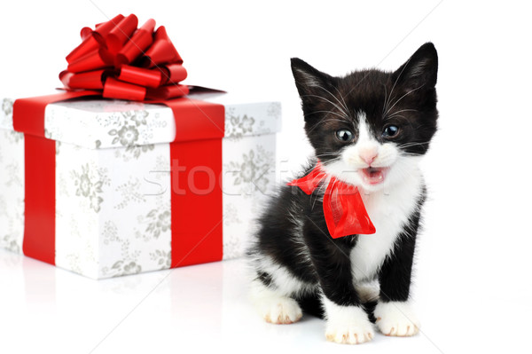 small cute kitten  Stock photo © taden