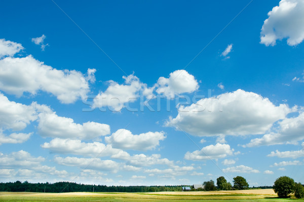 summer landscape Stock photo © taden