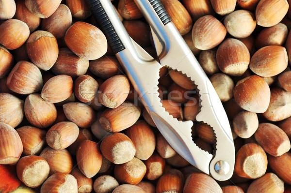 Hazelnoten hoop staal zaad Stockfoto © taden