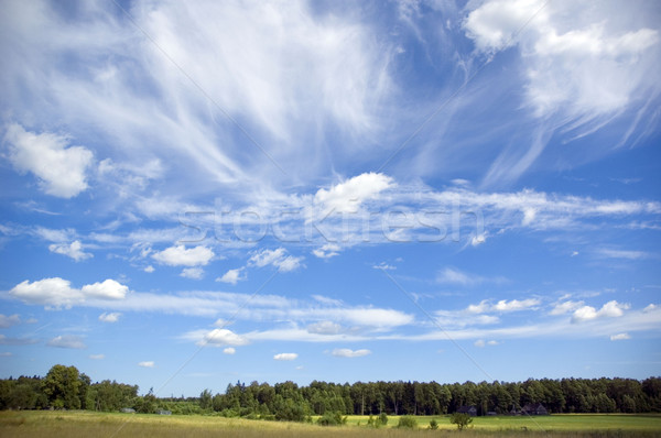 été paysage ciel herbe résumé vert Photo stock © taden