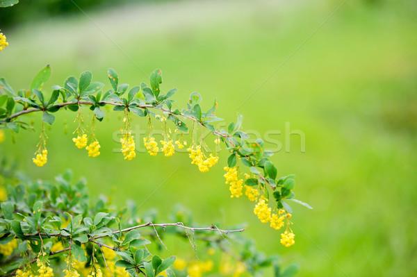 Tavaszi virágok közelkép virág fű természet levél Stock fotó © taden
