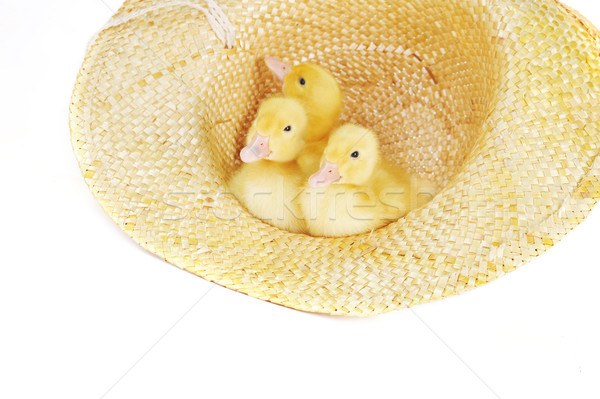 желтый пушистый три Cute соломенной шляпе изолированный Сток-фото © taden