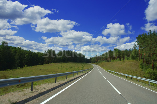 road in the forest Stock photo © taden