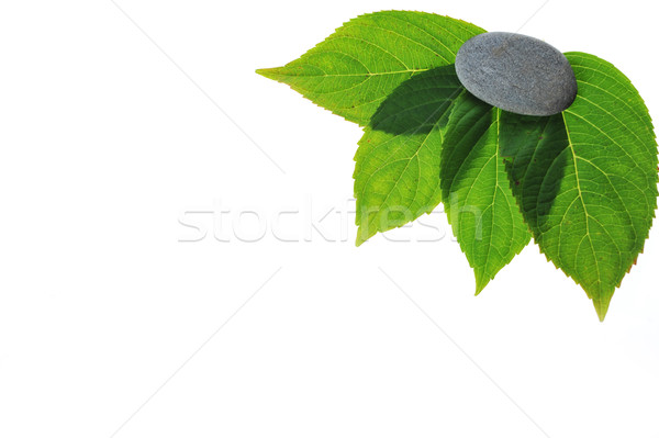 green leaves  Stock photo © taden
