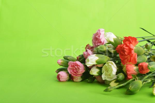 çiçekler karanfil buket renkli çiçek Stok fotoğraf © taden