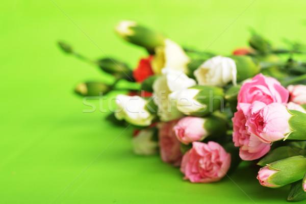 Blumen Nelke Bouquet farbenreich Blume Stock foto © taden