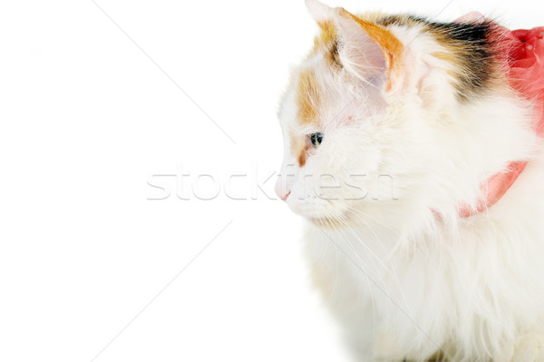 white cat with russet  stainswhite cat with russet  stains Stock photo © taden