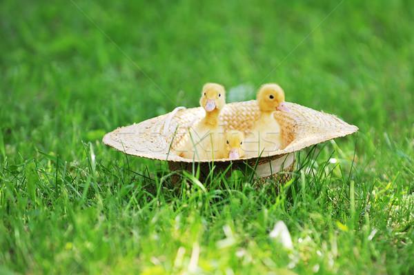 Soffice tre cute seduta paglietta erba Foto d'archivio © taden